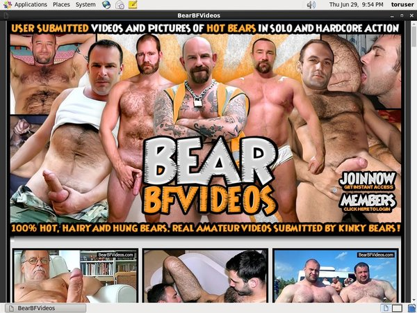 Limited Bear BF Videos Discount